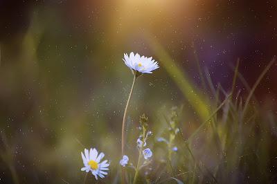 Rosnący kwiat