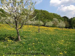 Frühlingswiese in Altenstein Foto von Stampin' Up! Demonstratorin in Coburg