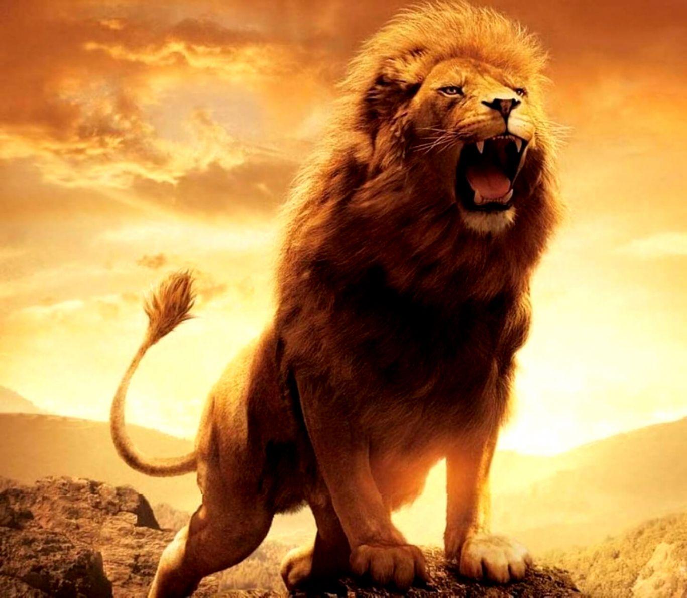 Lion Man Hd Wallpaper Wallpapers Ninja