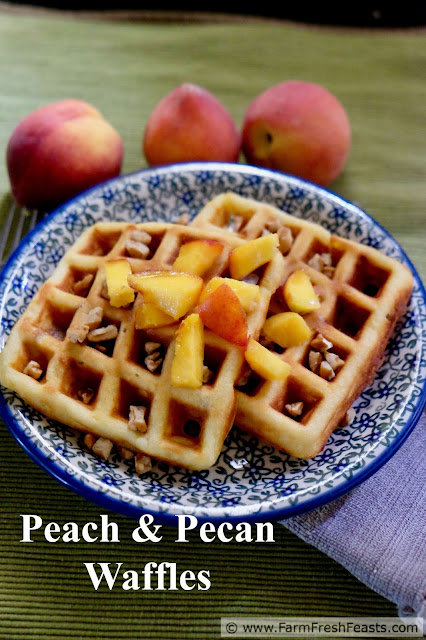 Chunks of ripe peaches and chopped pecans flavor these whole grain waffles. Peach and Pecan waffles are perfect for a summer breakfast or brunch.