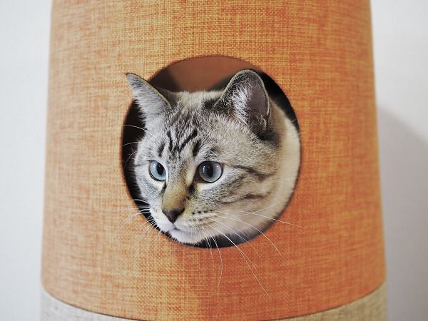 一番上の段の穴から顔を出すシャムトラ猫