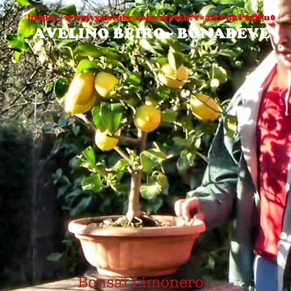 Huerto urbano luis servia borgas limonero enano peque o - Huerto para principiantes ...
