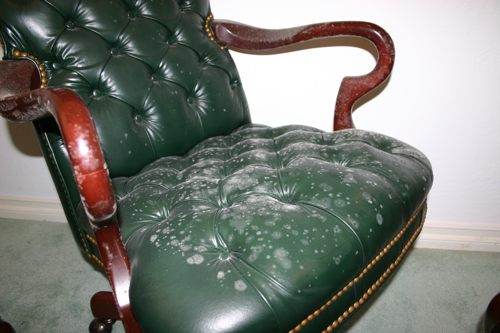 how to remove musty odor from sofa sleeper comfortable bed all stains mold leather