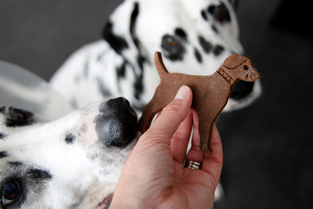 "Dalmatian dog sniffing the ""bum"" of a dog shaped dog treat"