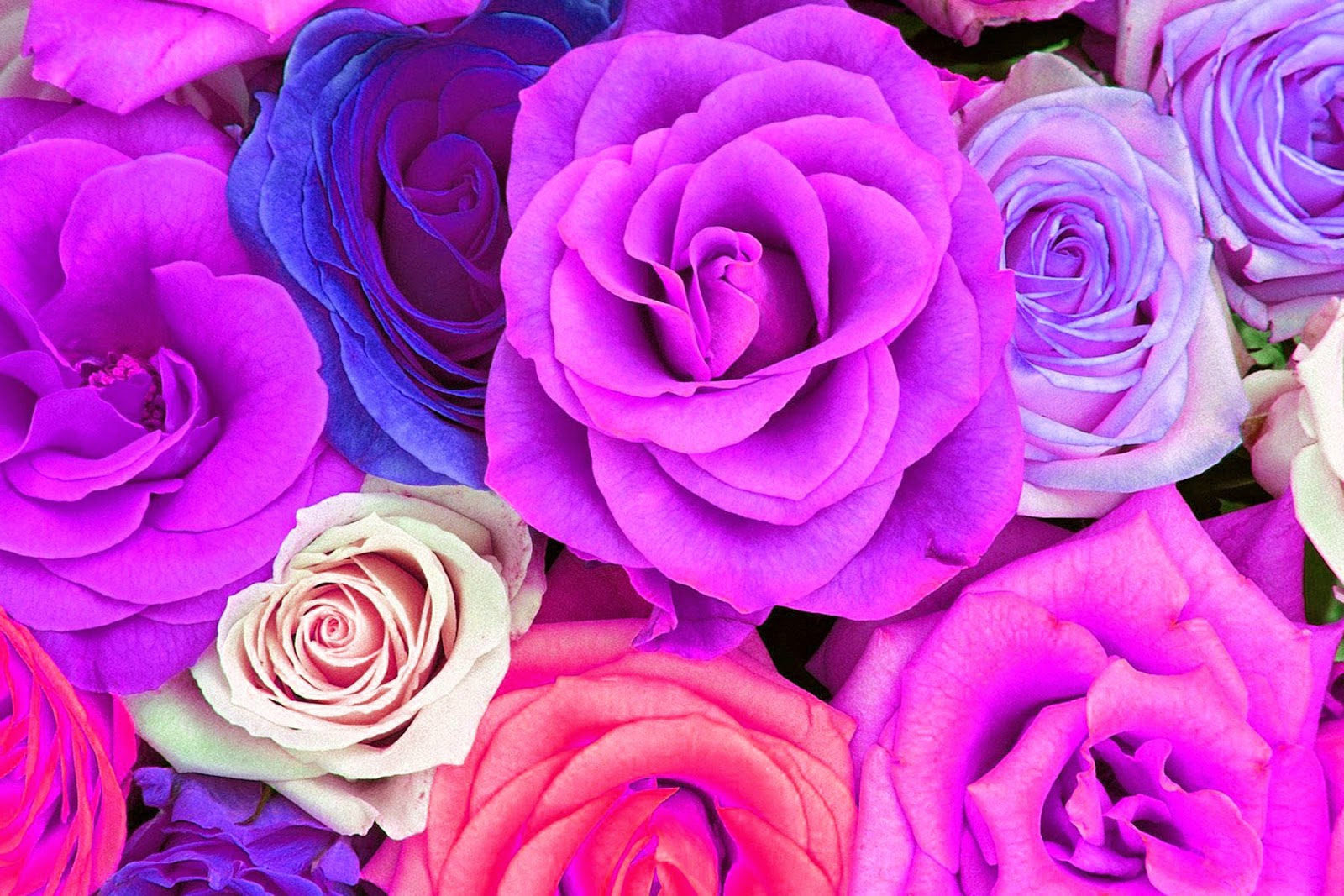 Doodlecraft: Watercolor Roses Wallpaper Freebies!  Purple