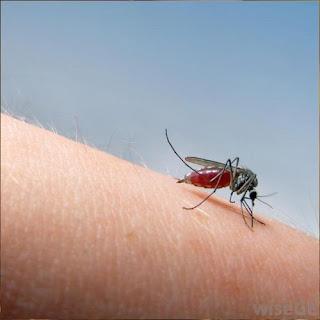 bons moyens pour soulager les piqûres de moustiques