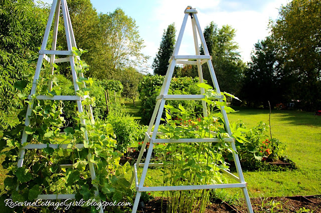#Garden #GrowYourOwnFood #Chickens #RaisedBeds #OrganicGardening #Veggies #Overalls #Farmlifestyle #Farm