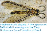 http://sciencythoughts.blogspot.co.uk/2017/07/parababinskaia-elegans-new-species-of.html