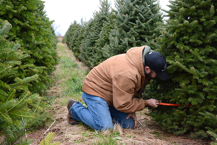 Christmas Tree Hunting |My Darling Days