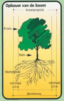 Groen en welzijn hoe om te gaan met bomen op de bouwplaats - Hoe een boom te verlichten ...