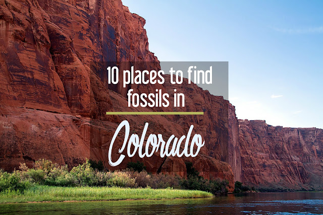 Calling All Paleontologists: 10 Places to Find Fossils in Colorado | CosmosMariners.com