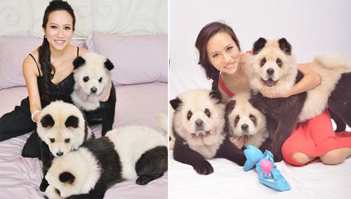 Anjing Berbulu Panda Lucu Atau Kejam