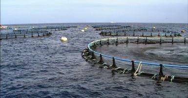 Blog de amanda el salm n y el pez panga para nuestra salud for Comida peces estanque barata