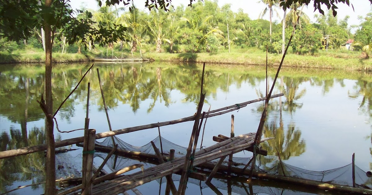 Fish pond buddy how to start a bangus milkfish farm for How to start fish farming