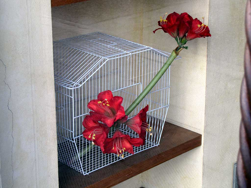 Flowers in a cage, via Ricasoli, Livorno