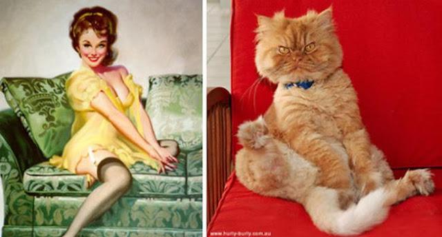 14 em mèo chân ngắn học đòi cosplay ảnh sexy