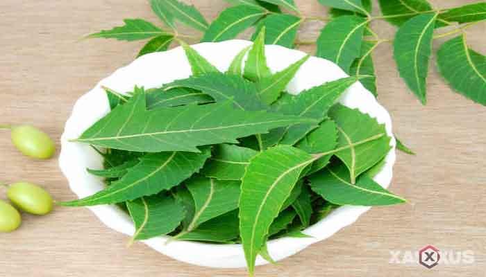 Cara menghilangkan bruntusan di wajah dengan neem