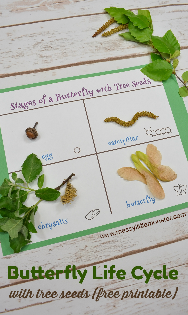 Stages of a Butterfly Life Cycle Seed Activity for kids. Free life cycle of a  butterfly printable included. Help toddlers and preschoolers learn about tree seeds and the butterfly life cycle with a fun seed scavenger hunt.