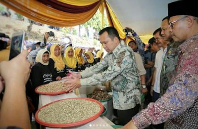 Gubernur Ridho Dorong Hilirisasi Kopi Robusta Tanggamus