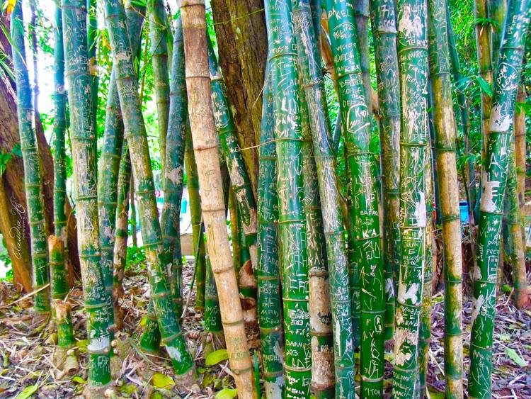 troncos escritos bosque jequitibás