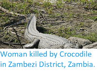 https://sciencythoughts.blogspot.com/2018/03/woman-killed-by-crocodile-in-zambezi.html