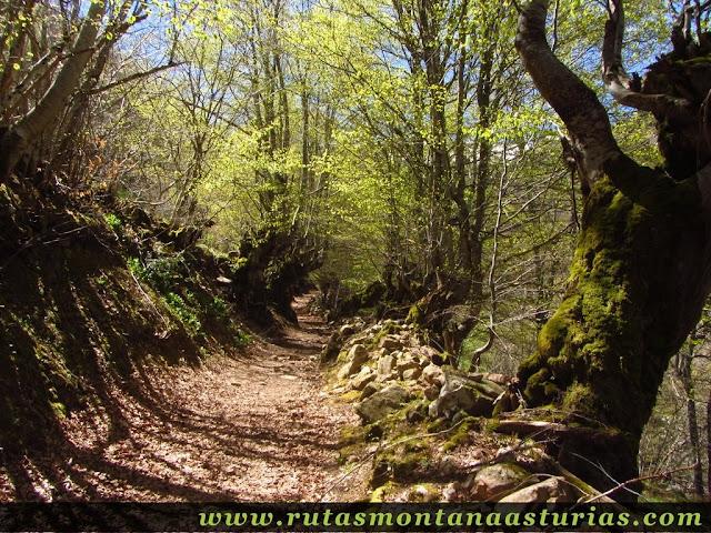 Camino entre robles del Tabayón del Mongallu