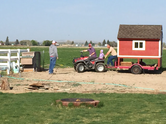 Moving the small building with a 4-wheeler and trailer
