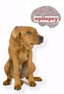 veterinaria online epilepsia en perros
