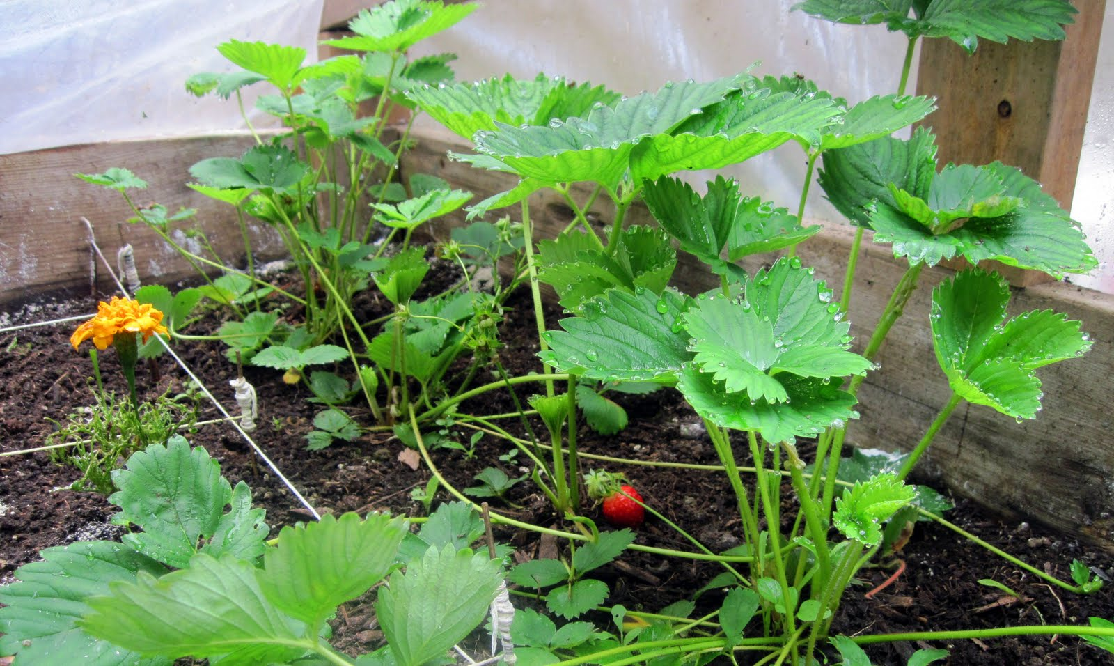 Raised Vegetable Garden Mix