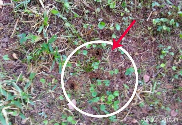 Las claves para recuperar un c sped estropeado guia de for Hongos en el cesped jardin