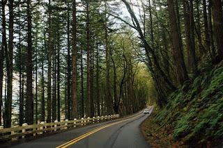 Une route dans la forêt empruntée par une voiture
