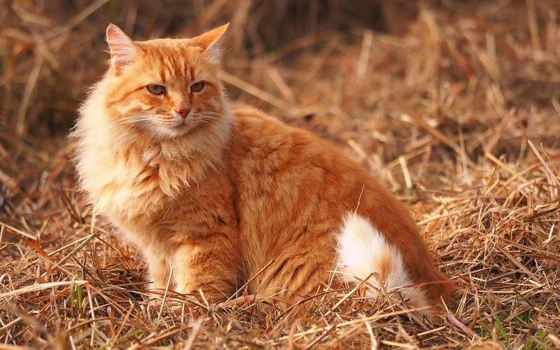 żwirek dla kota, rodzaje żwirku dla kota, żwirek drewniany, żwirek bentonitowy, żwirek kukurydziany, żwirek słomiany, żwirek tofu, żwirek silikonowy, jak wprowadzić nowy żwirek