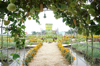 Jombang City Guide Agrowisata Taman Sayur Banjarsari Keukenhofnya