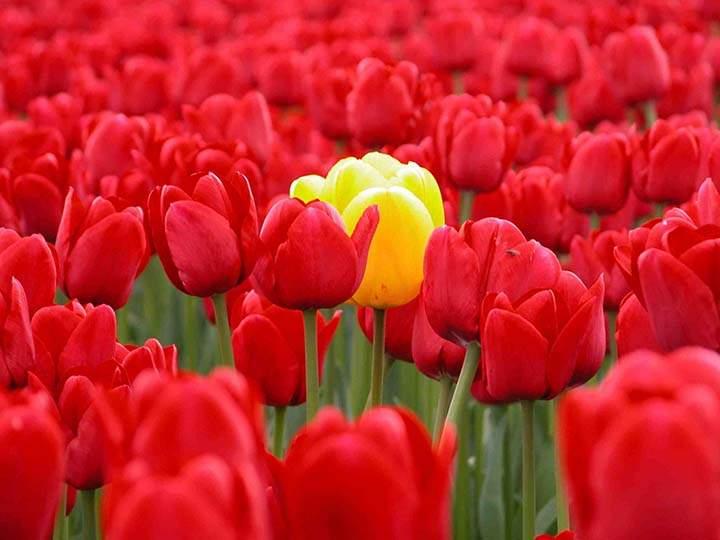 çiçek tarlasında çiçek resimleri