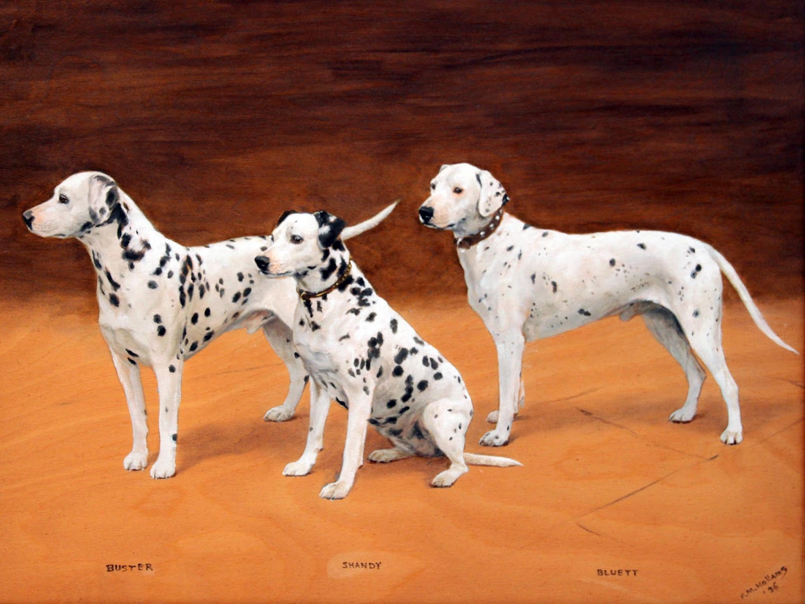 Beautiful And Cute Animal Wallpapers besides Big further Farm Dogs Part 1 161041169 also Dalmatian Wallpapers in addition Animals Animal Wallpapers Online Free Hd. on animal wallpaper dogs