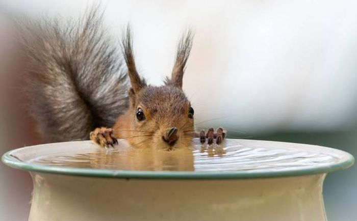 Funny animals of the week - 1 April 2016, cute animal, funny animal photo