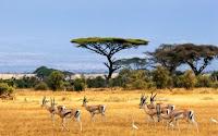 Antelopes Puzzle