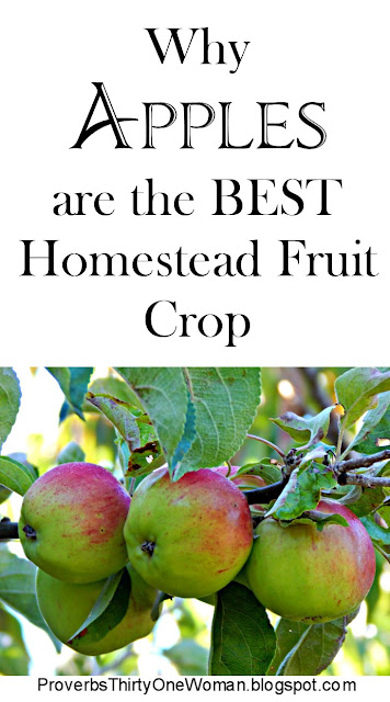 Why Apples are the Best Homestead Crop