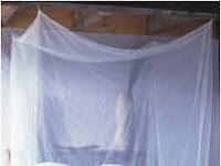 Cara Ampuh Mengusir Nyamuk Secara Alami