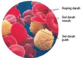 Sel Darah Merah, Sel Darah Putih dan Keping Darah