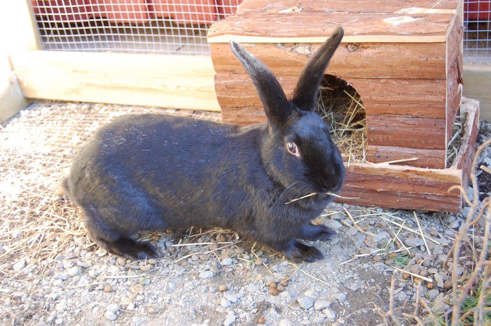 Kalle: Jonathans kanin utan namn.