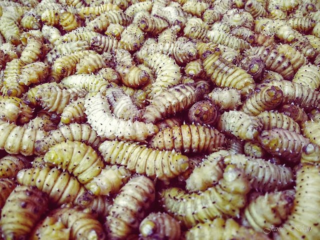 naga-food-nagaland-silkworms