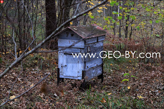 Puszcza Nalibocka. The box turned out to be a hive