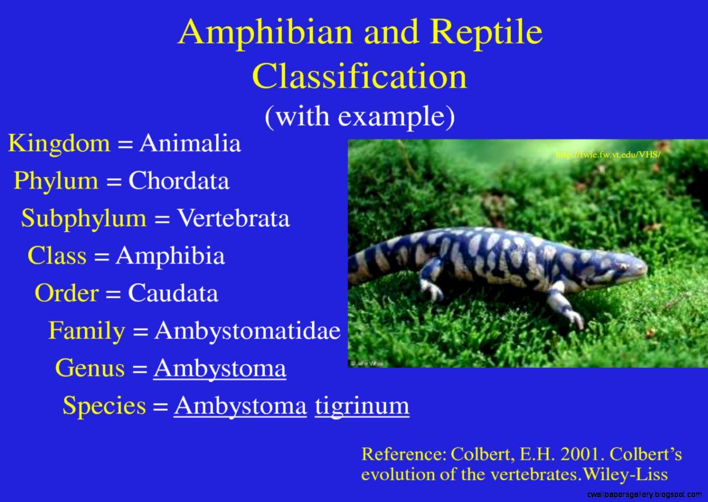Reptiles Examples