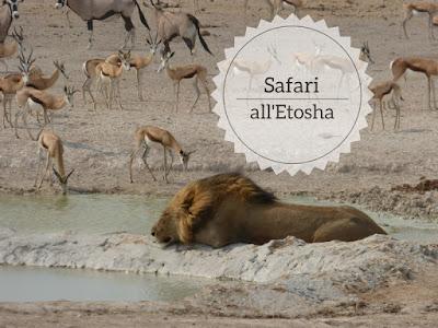 Safari all'Etosha National Park un leone che dorme