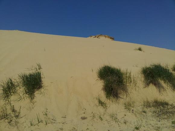 Херсонська область. Піщаний масив «Олешківські піски»
