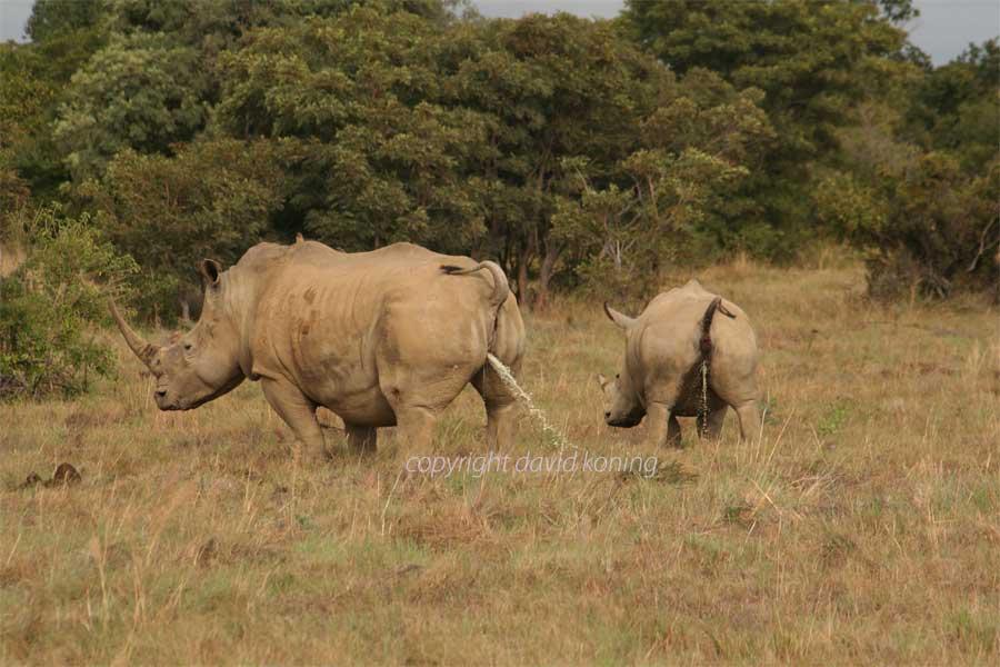 Funny Rhino Photos Funny Animals