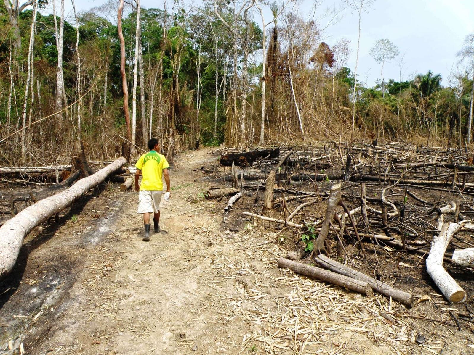 Desmatamento gerou 2.539 ações na Justiça em 2017, mas nenhuma condenação