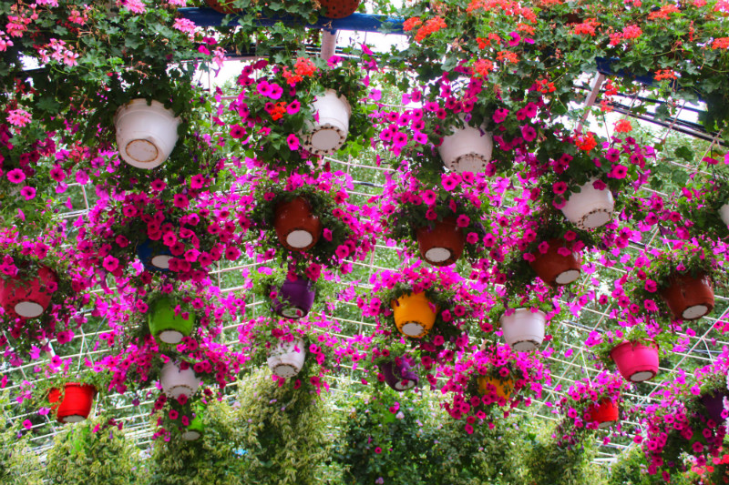 Dubai Miracle Garden View