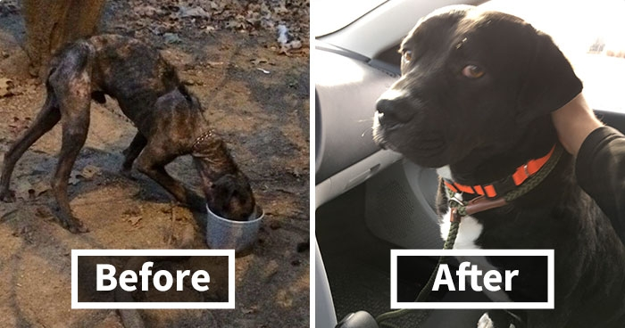 Dog Chained For  Years Finds New Home
